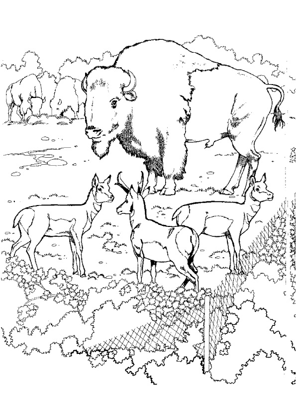 zoo-coloring-page-0002-q2