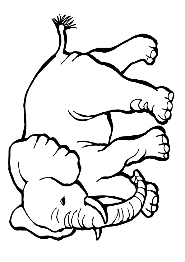 zoo-coloring-page-0018-q2